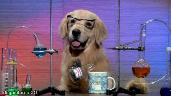Lab_Dog.jpg
