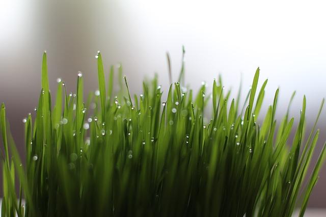 grass-1524838_640.jpg