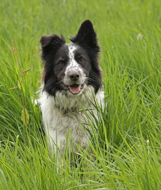 grass-3318086_640.jpg