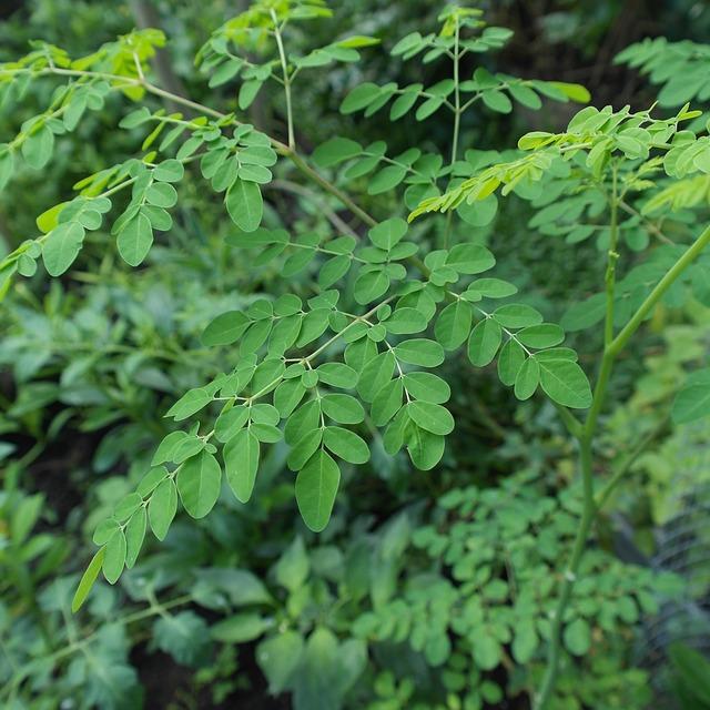 plant-2307261_640.jpg