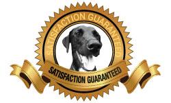 Satisfaction-250x150.jpg