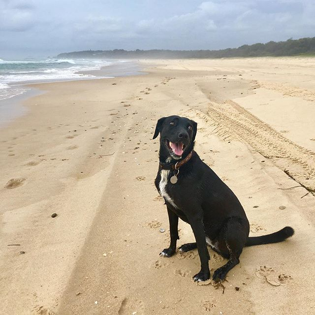 Sunday fun at the beach. Hope you're having a great weekend too! #weekendsarethebest #happydog #vallabeach #luckycountry