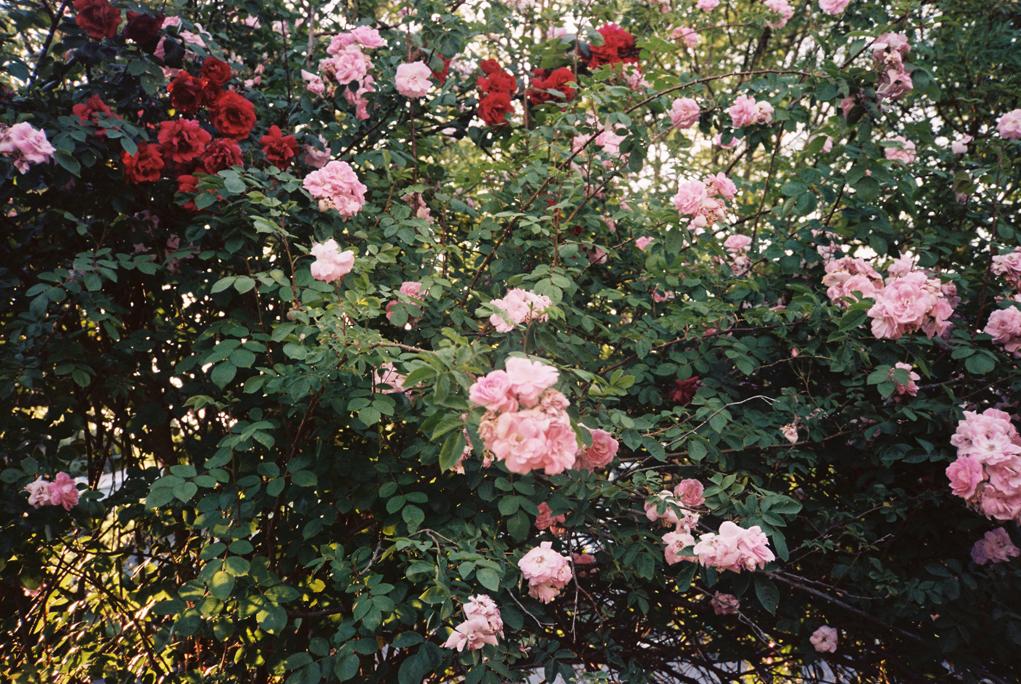 FilmSummer1Blog_0016_20140711