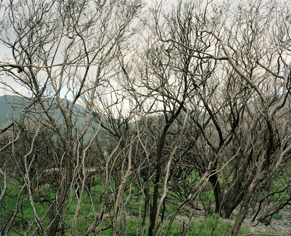 Thicket, chromogenic print, 108 x 135 cm