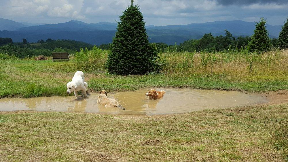 skye dogs