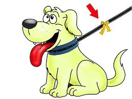 perro-amarillo.jpg