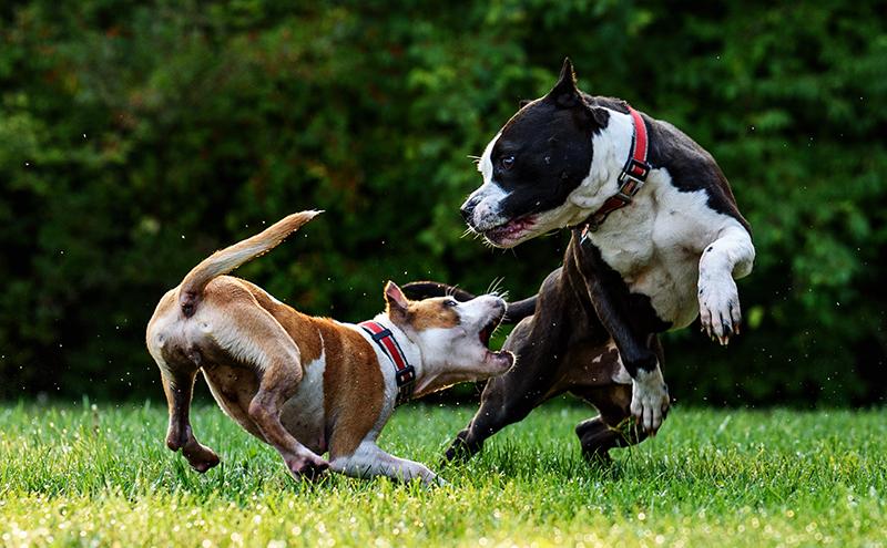 dogs2.jpg