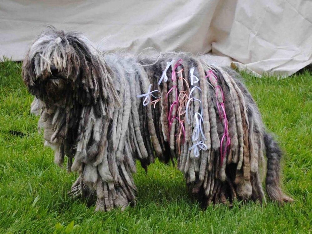 Ve muchas más fotos de este hermoso perro en  Google ➝