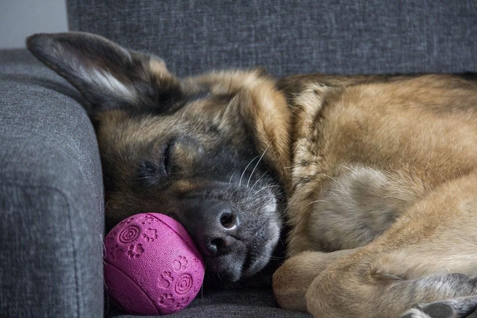 etología-canina.jpg