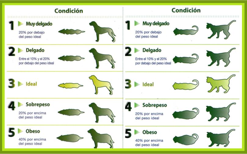 Tabla de peso para mascotas