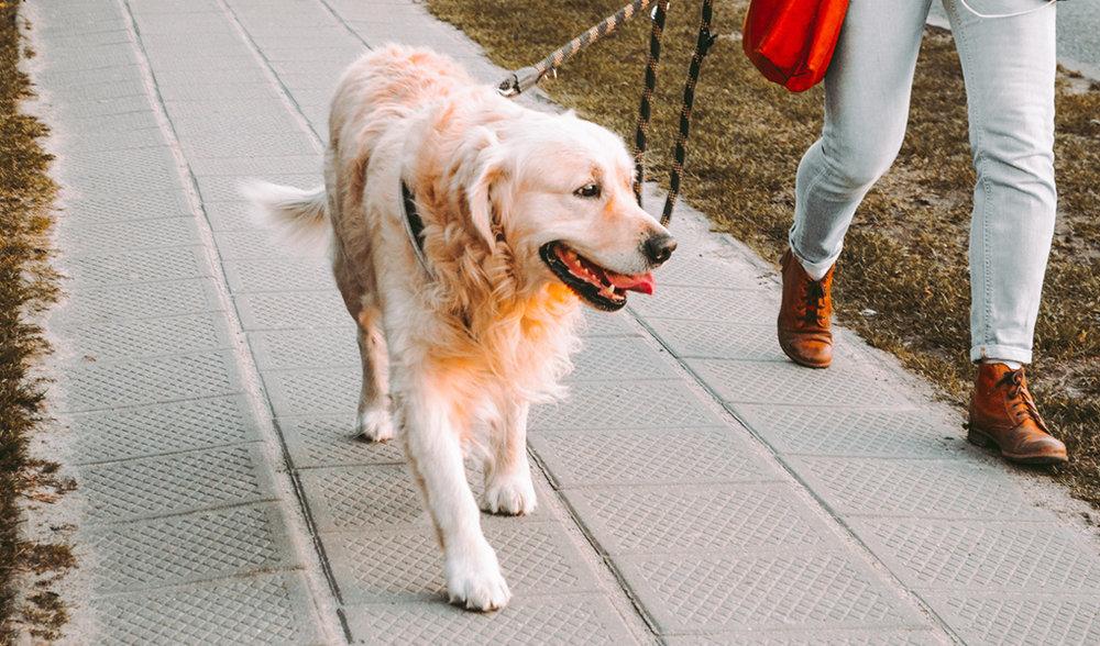 Perrito con correa en la calle
