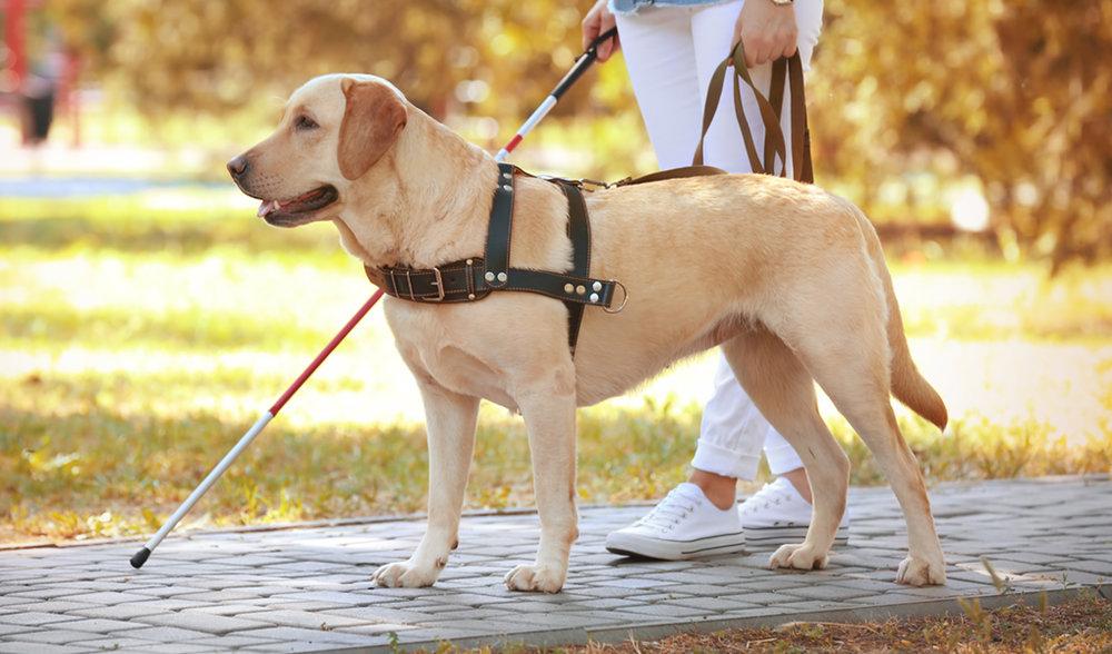 Perro Guía ayudando a una persona ciega
