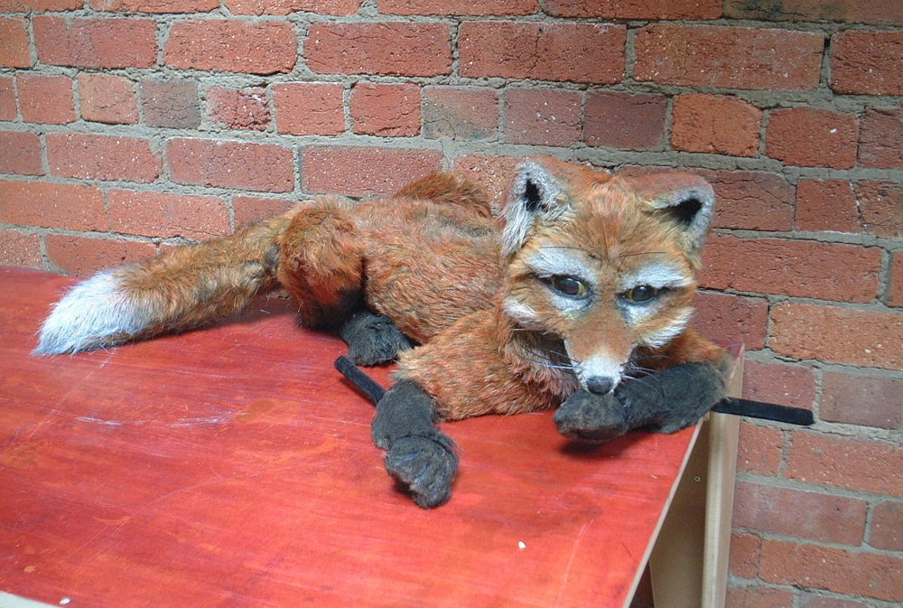 D250842_Gaskell_fox.jpg