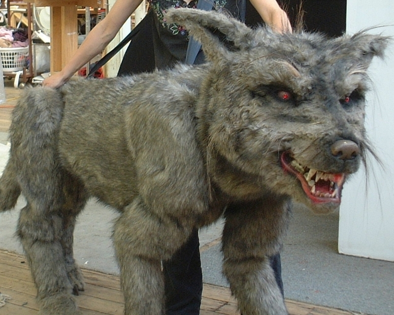 wolf with trina.JPG