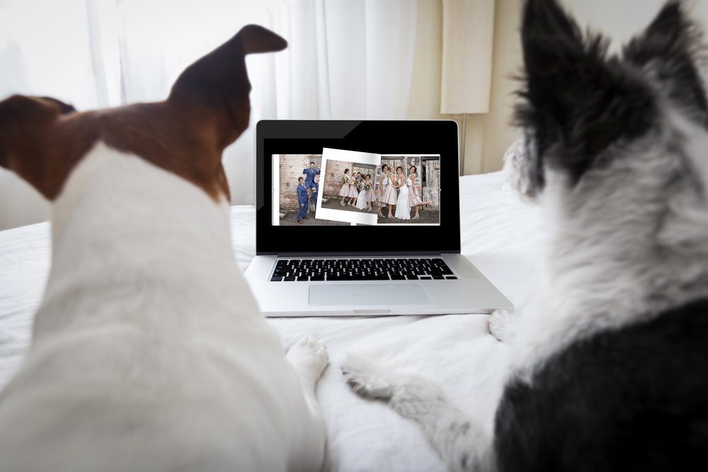 Your pets can view it too! -