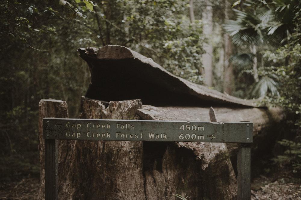 Madeleine_Nathan_Gap_Creek_Falls_Watagens_Anteloping_Elopement-72.jpg