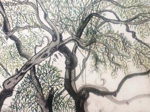 Corfu tree.jpg