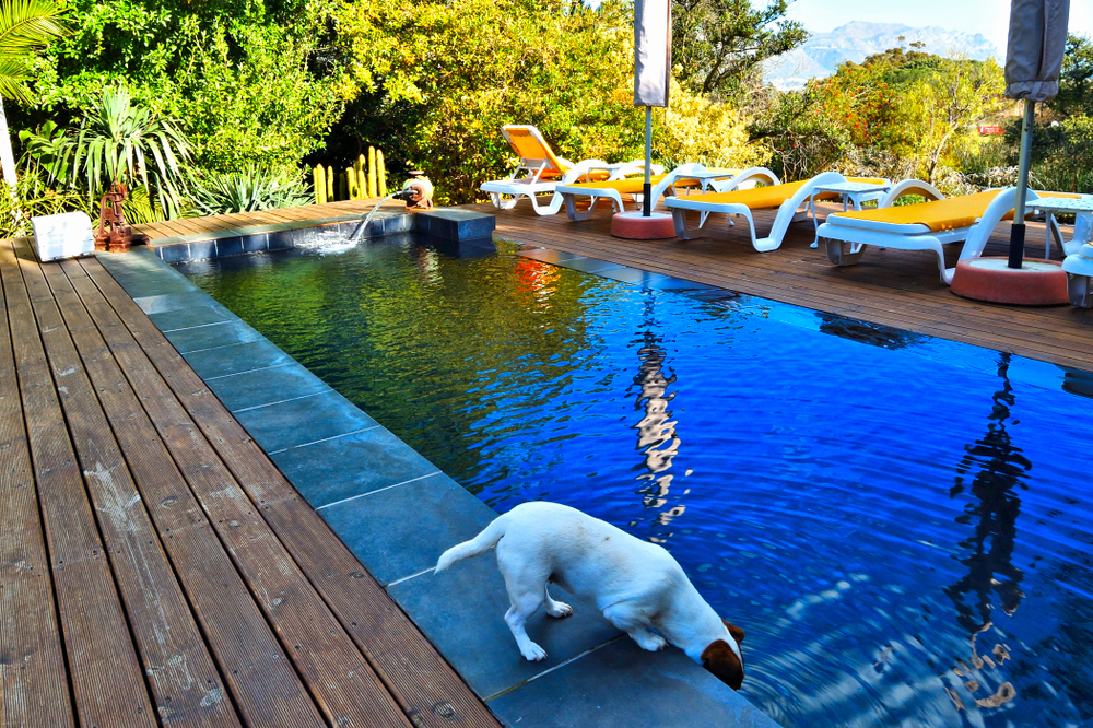 Dog drinking from the swimming pool at Chelaya Country Lodge