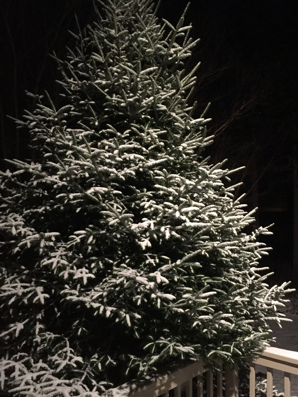New England Christmas tree in the snow