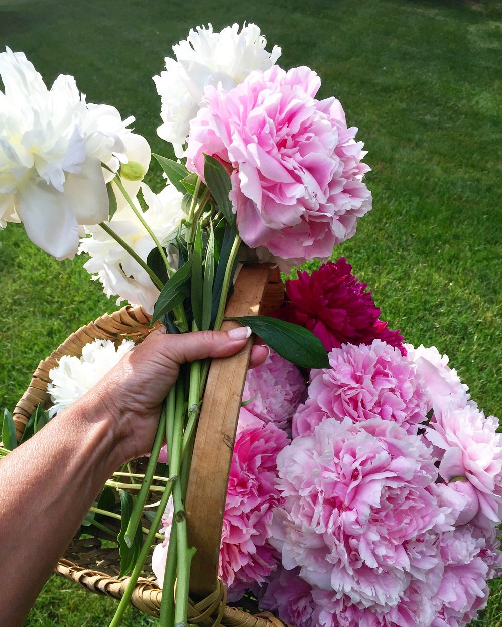 pink and white peonies.jpg