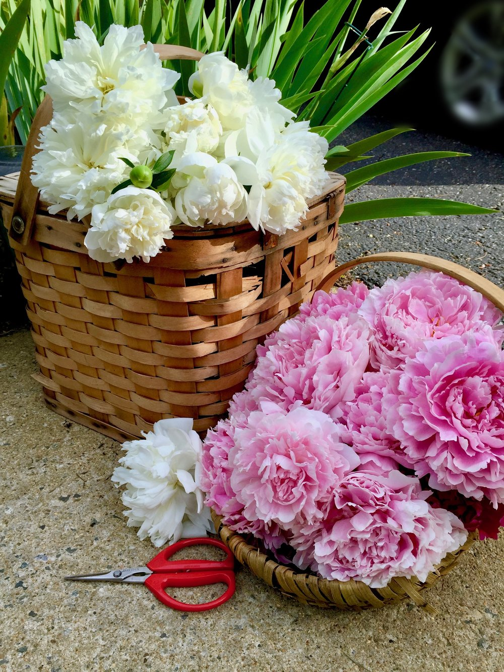 pink and white peonies in basket.jpg