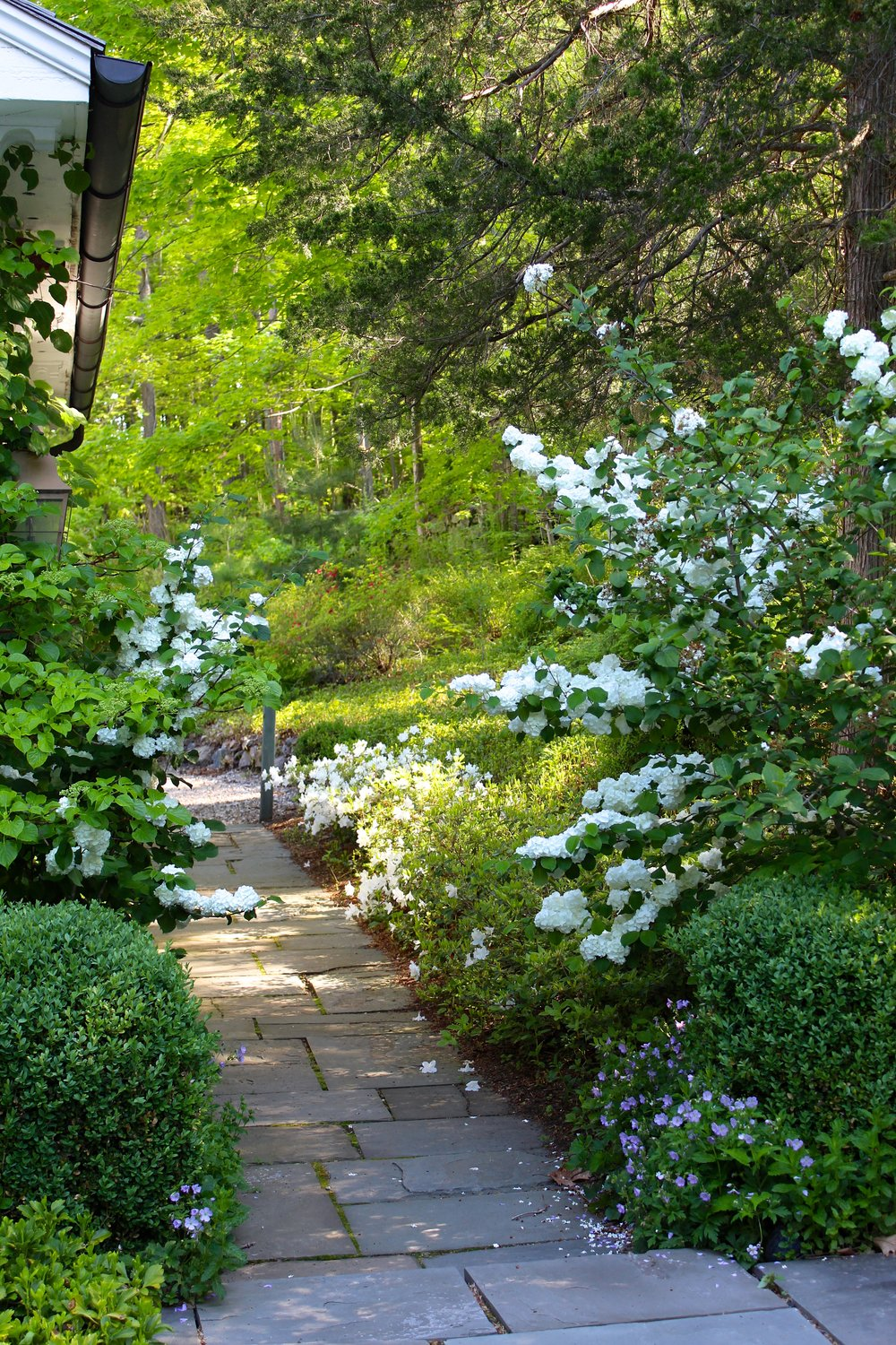 Back flower path 2.JPG