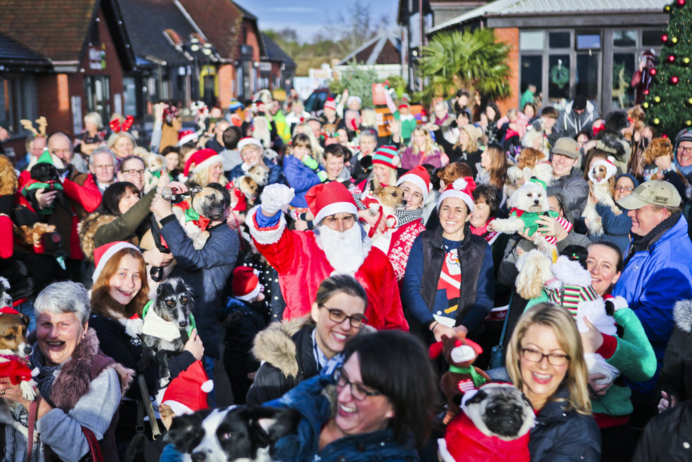 2016 Valley Christmas Dog Parade