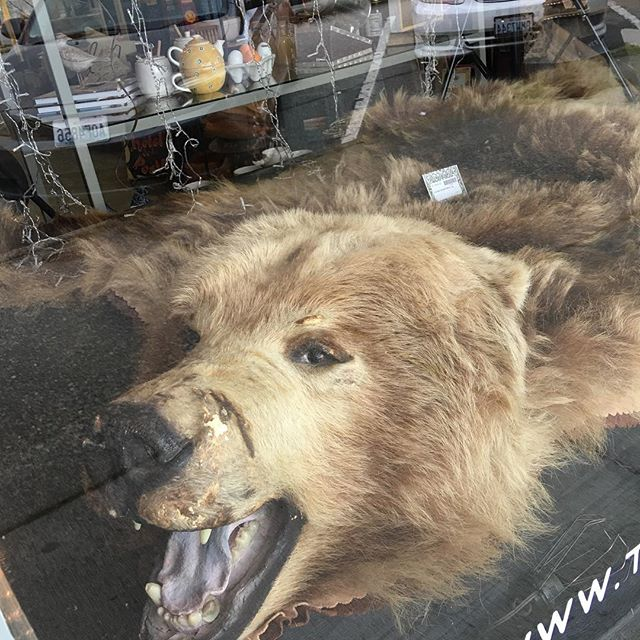 Have you been to our shop lately? It's filled with unique one of a kind items. Check out this Kodiak Grizzly rug we just got in. #downtown #snohomish #shoplocal #shopsmall #consignment #triedandtrueboutique