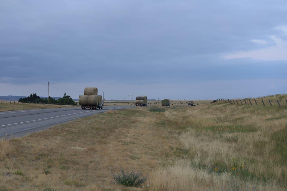 Neighbors from Judith Basin County heading to Garfield County. Keon Holzer, photo