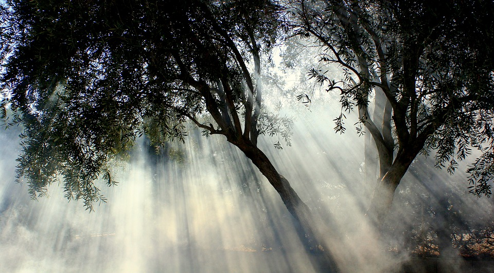 foggy-1122136_960_720.jpg