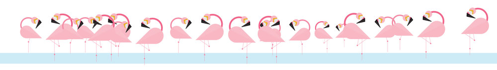 loads of flamingos.jpg
