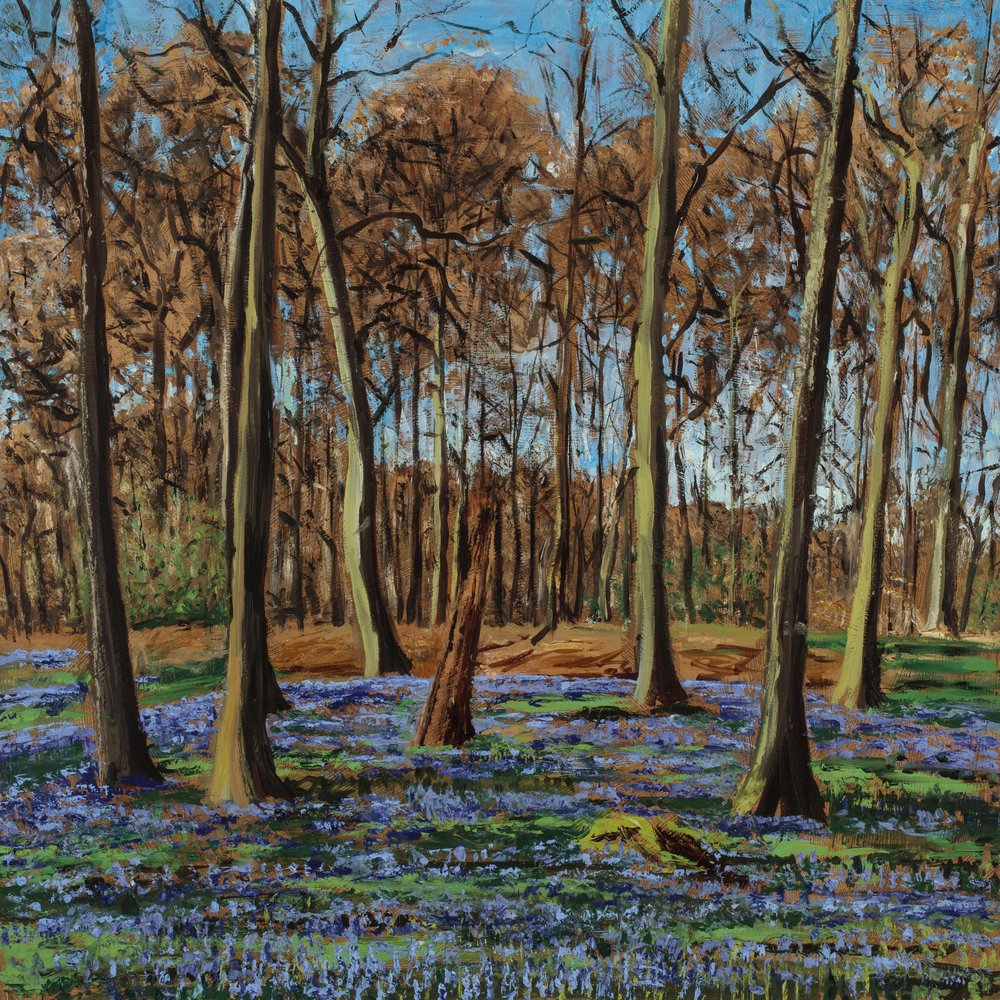 Bluebells in the Chilterns I (SOLD)