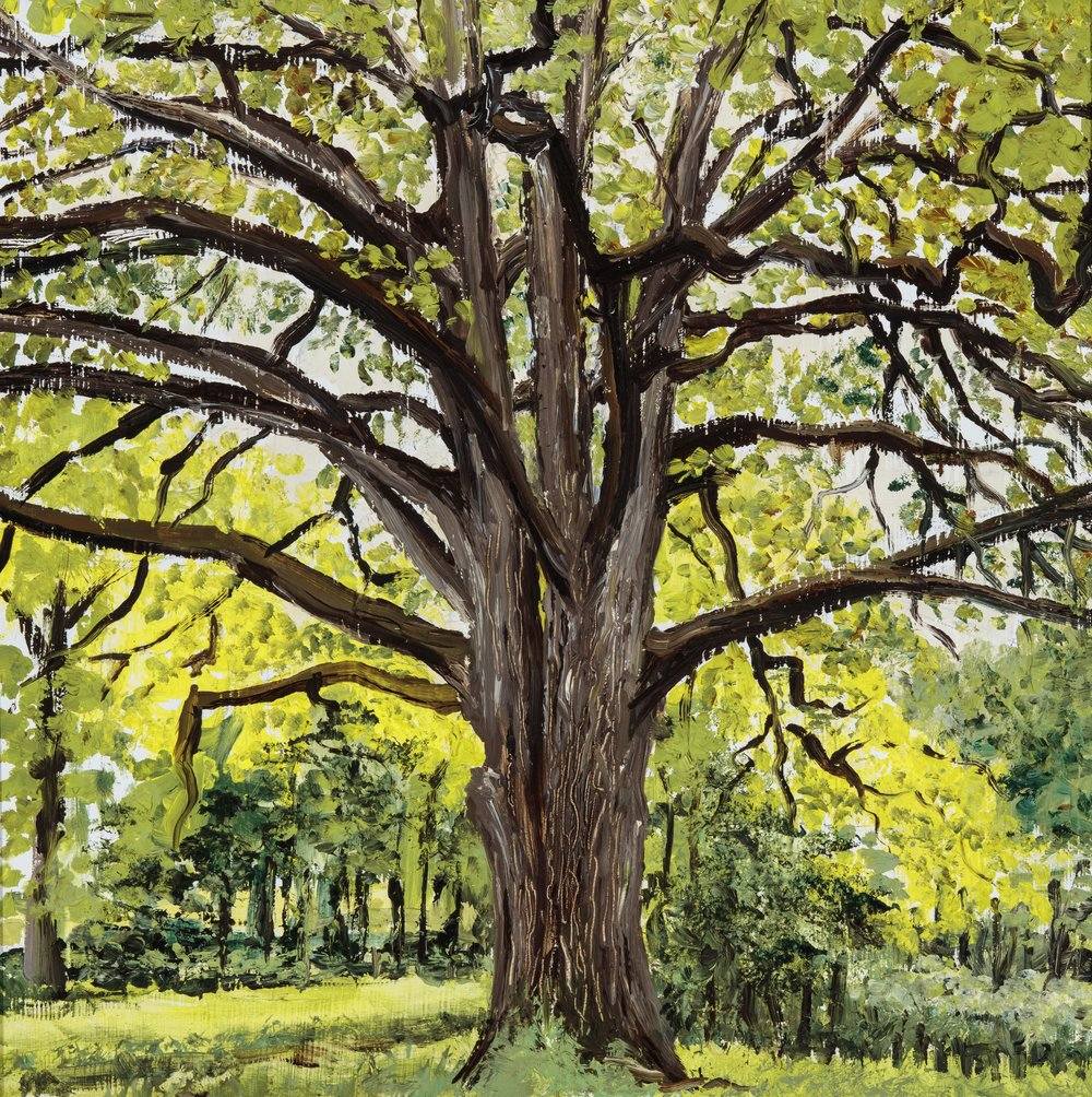Great Oak I (SOLD)