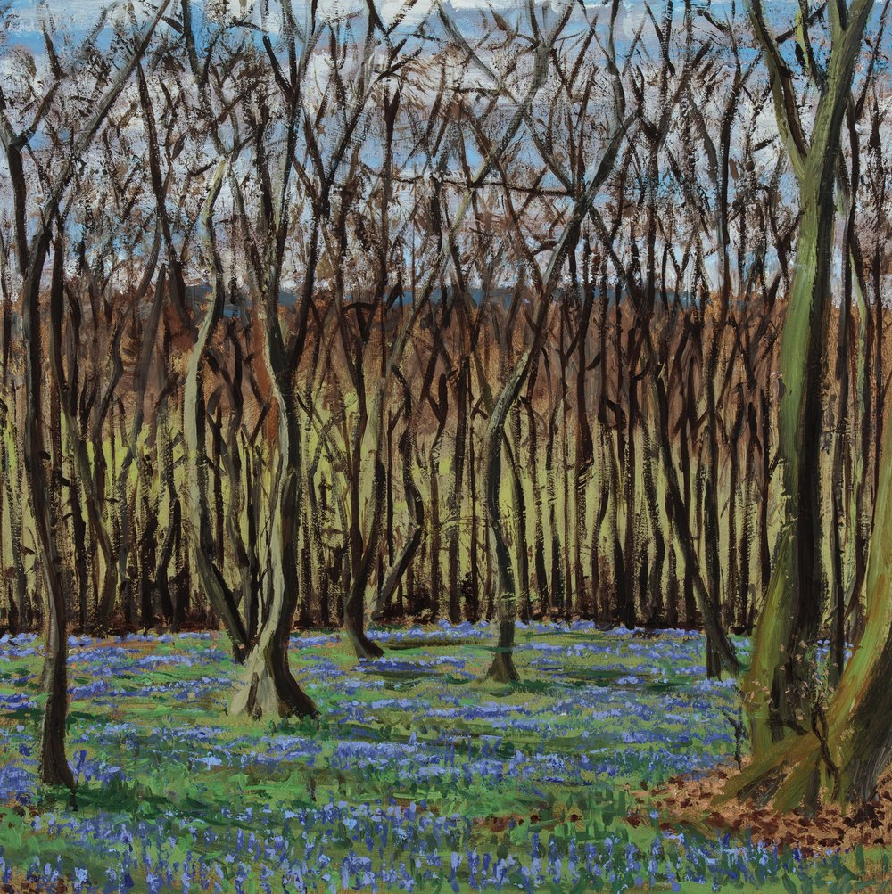 Bluebells in the Chilterns II