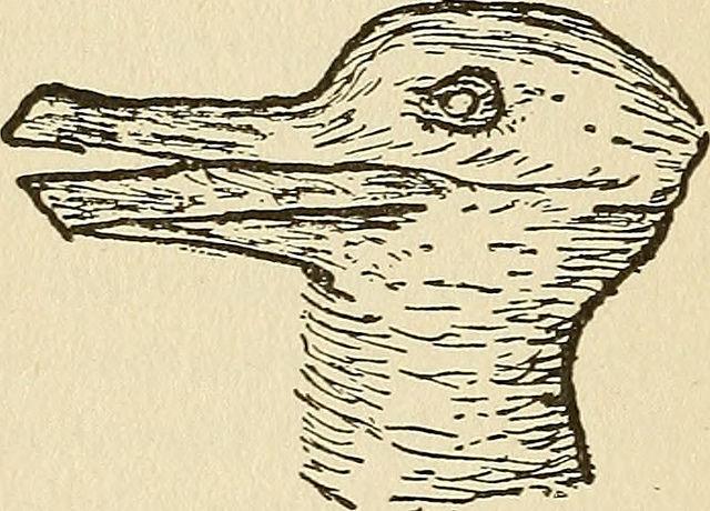 rabbit duck.jpg