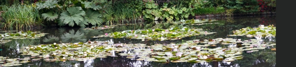 27-Waterlilies_Fotor (1).jpg