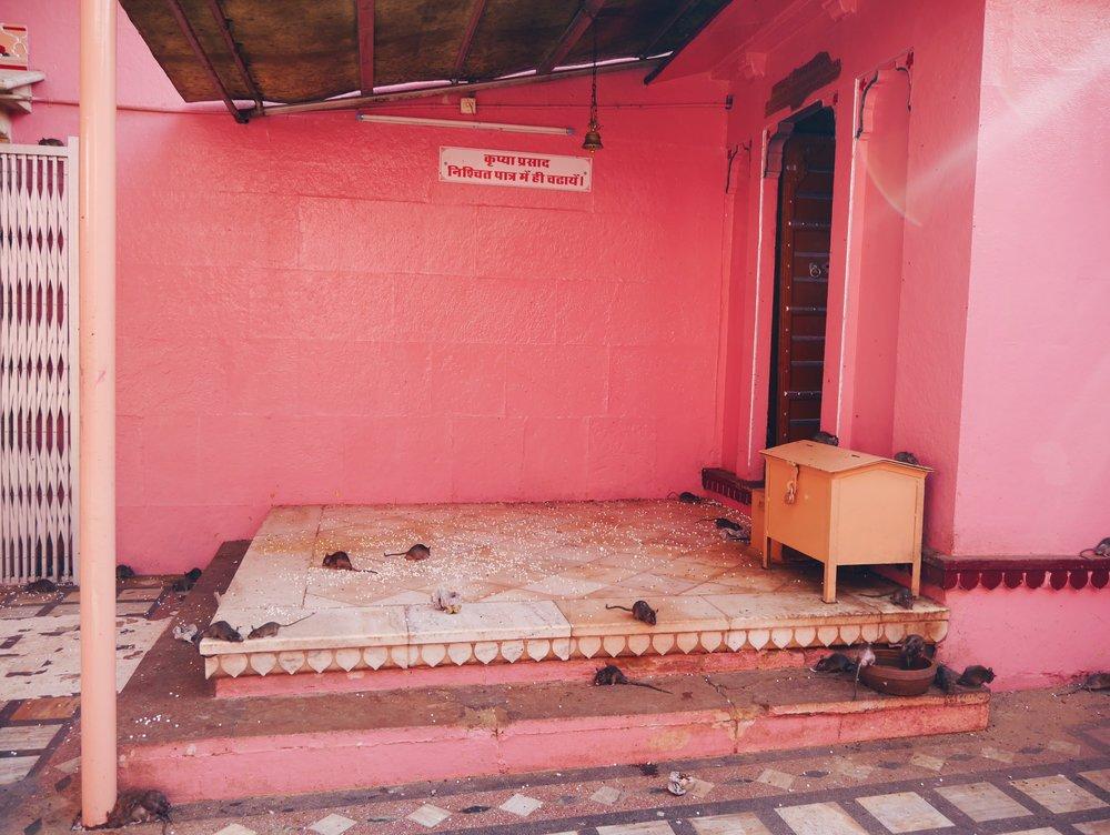 Rat Temple | Bikaner — A Little Homesick
