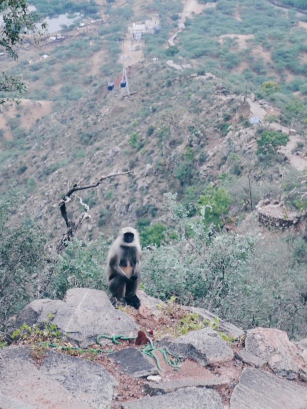 Monkey outside the Sati Temple!