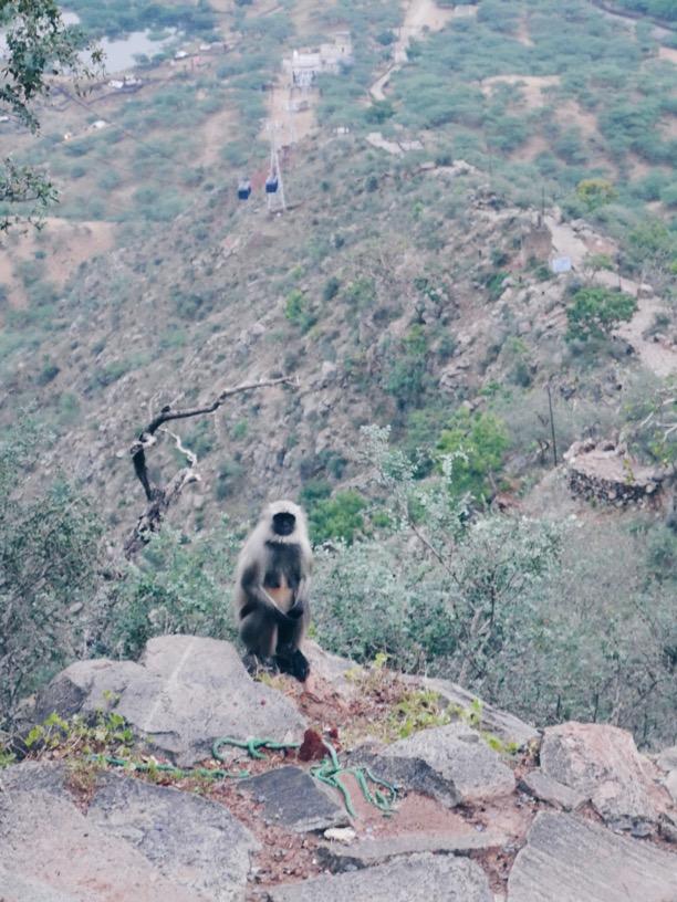 Monkey outside the Sati Temple!