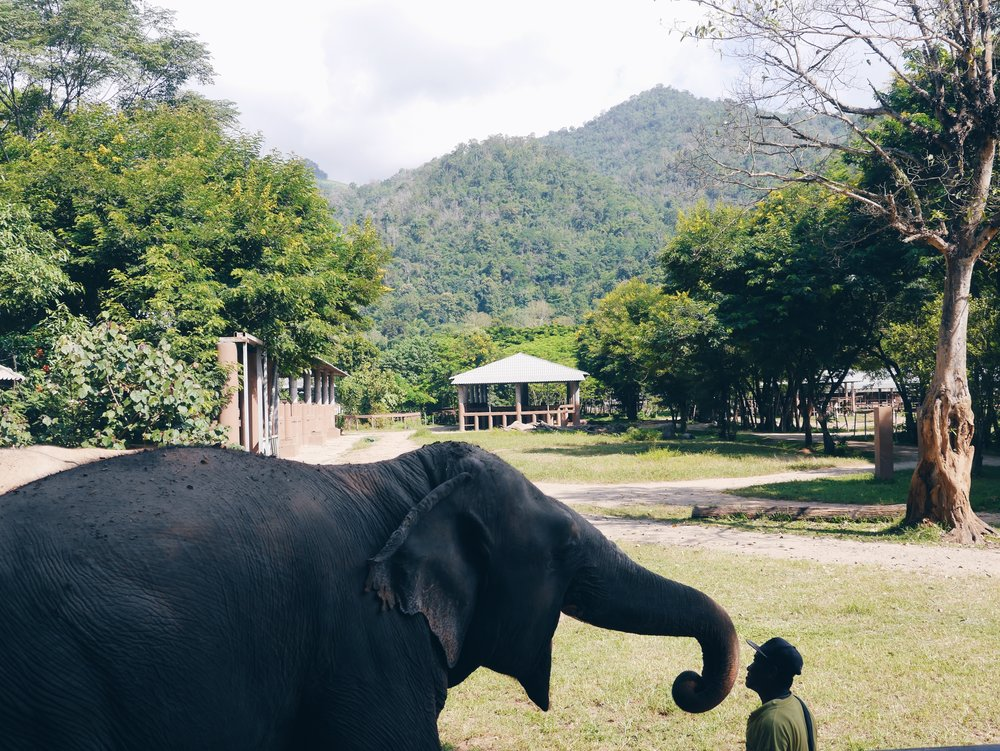 Lucky and her mahout.