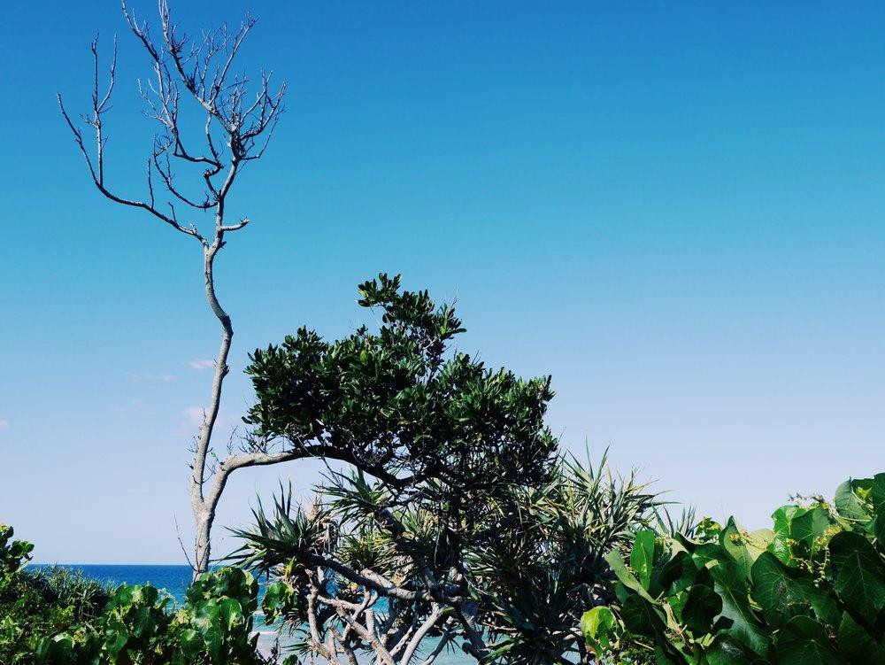 burleigh-heads-queensland-gold-coast-australia