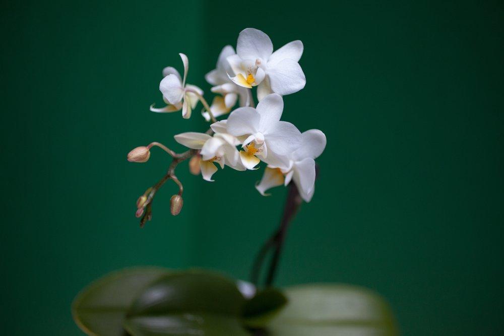 orchid-383068.jpg