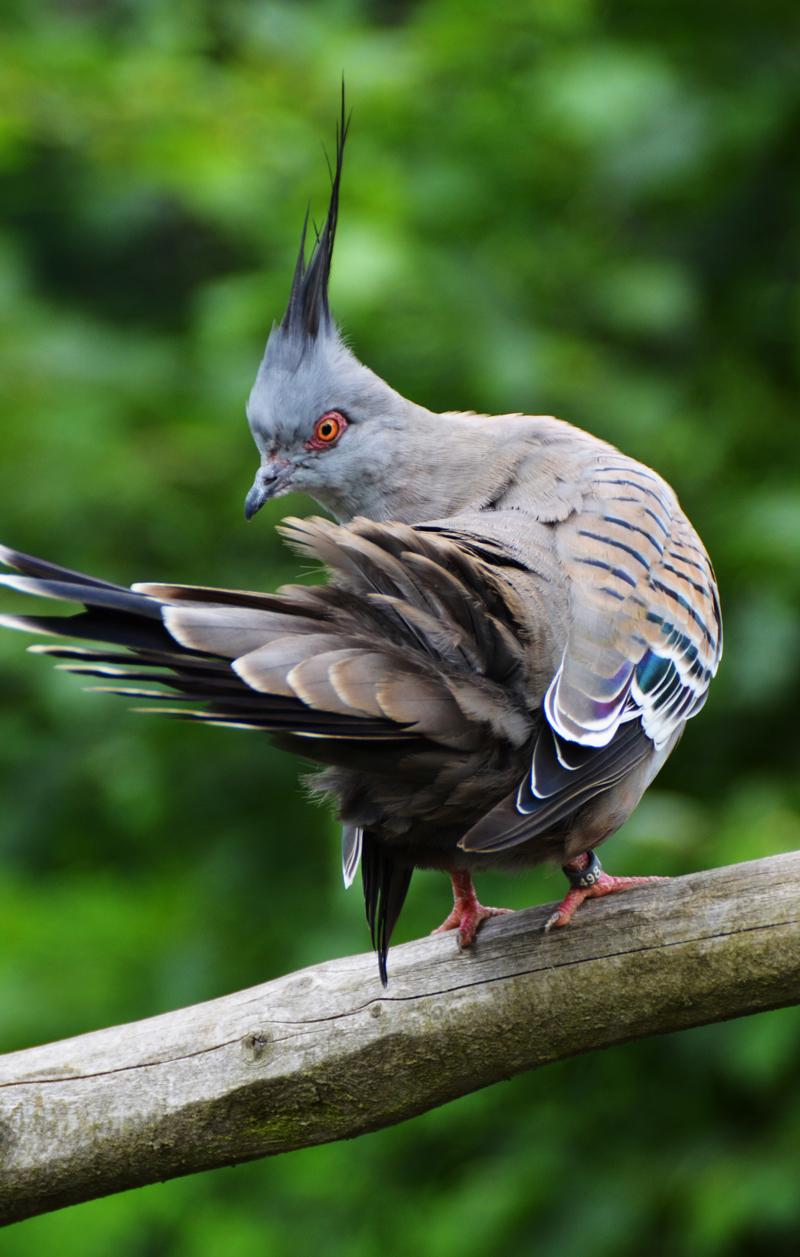 dove-1748181.jpg