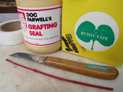 "Here are the supplies that I use.      Medel Buddy Tape, which is 1"" in length.  I cut this in half. This tape is stretchable.   Doc Farwell's Grafting Seal.  Tina 685 right-handed grafting knife.  A 6 inch long healthy branch from a cultivar that has about 3 pairs of buds. This one happens to be the Coral Bark Maple.  A seedling grown rootstock that has been kept in a warm place so is actively growing roots and is about ready to grow leaves.  The basic plan is to attach this cultivar to a rootstock and keep it all from drying-out until the cuts heal."