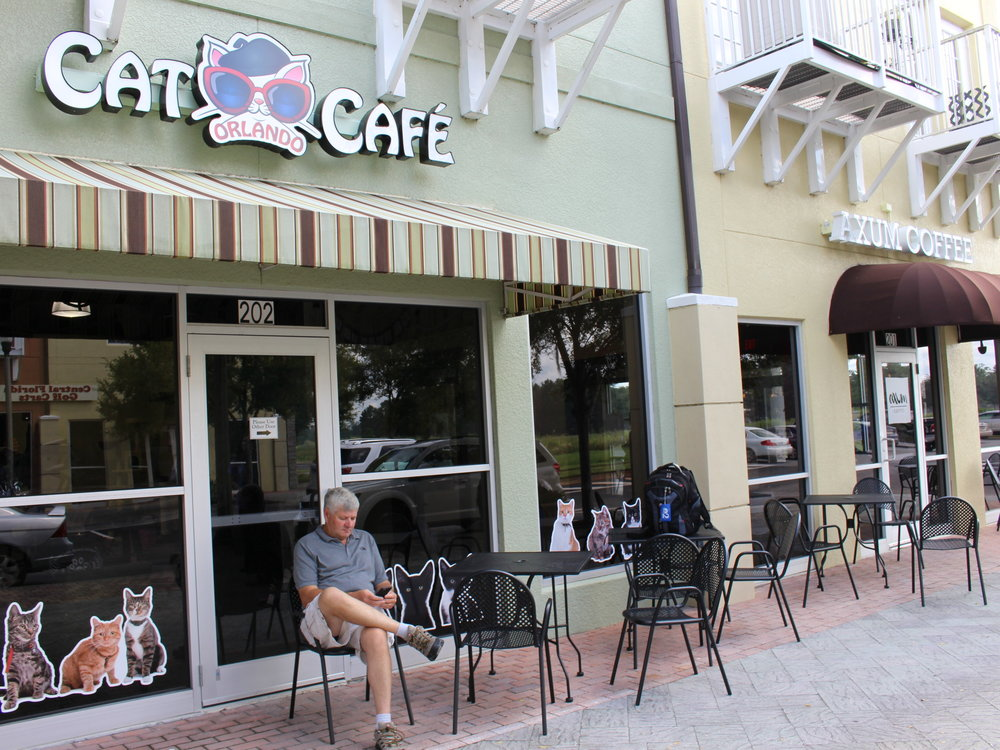 The Orlando Cat Cafe held its grand opening noon Thursday in Clermont. The cafe brought together animal adoption service The Animal League and Axum Coffee to create this new unique experience.