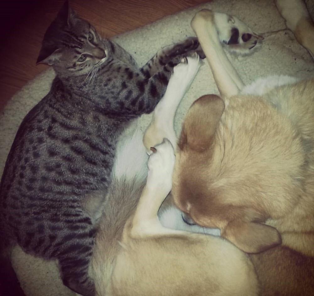 Max and Kaiyo