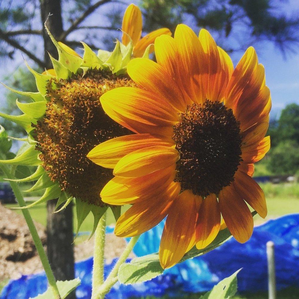 Fred Conrad - Atlanta Community Food Bank -Community Gardening Initiative