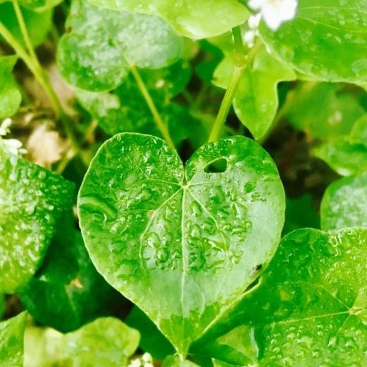 JennyMormon Dantley - Retired ATT Heritage Gardener