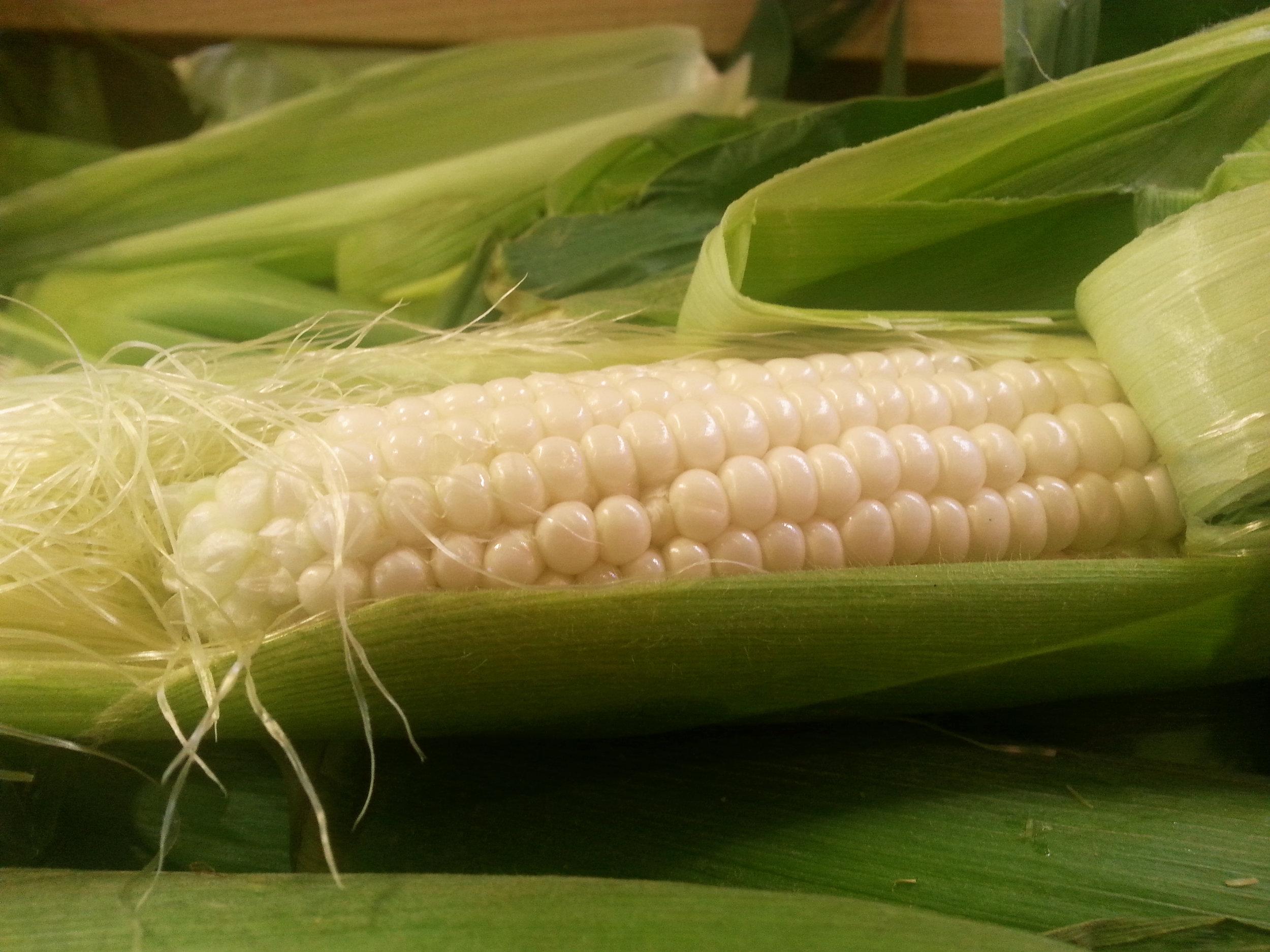 Summer_Sweet Corn