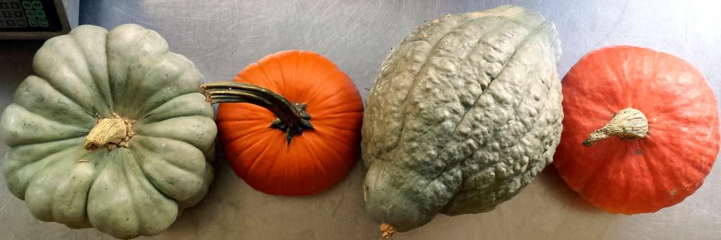 pumpkins in a line